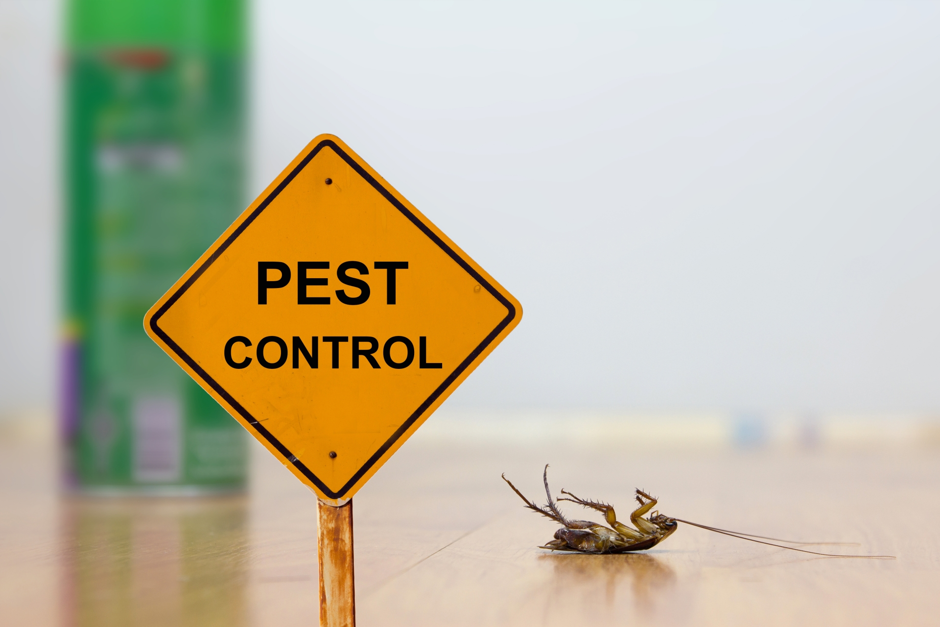24 Hour Pest Control, Pest Control in South Lambeth, SW8. Call Now 020 8166 9746