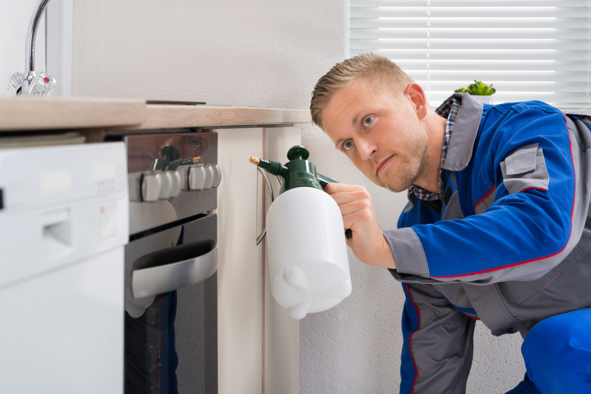 Pest Inspection, Pest Control in South Lambeth, SW8. Call Now 020 8166 9746