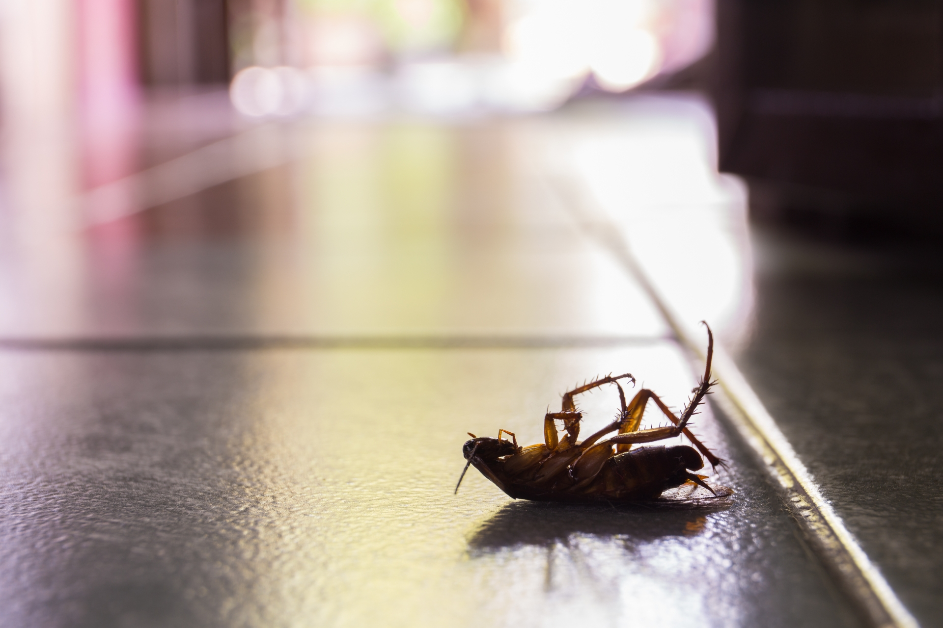 Cockroach Control, Pest Control in South Lambeth, SW8. Call Now 020 8166 9746